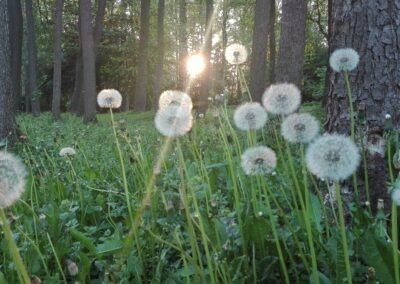 Parnu Pärnu Errit Kuldkepp Positively Inspiring Lifestyle (6)