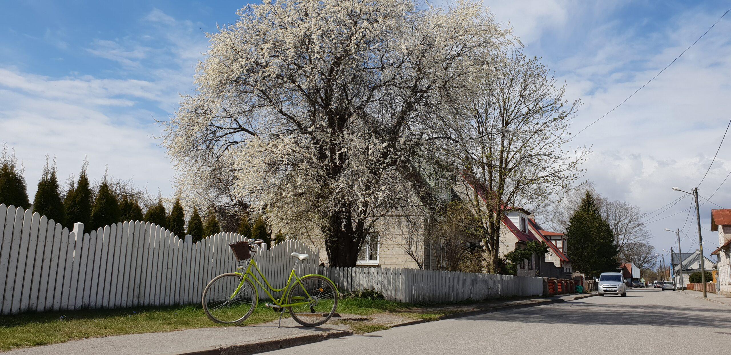 Spring in Parnu_ Errit Kuldkepp_Positively Inspiring Lifestyle_2020 (187)