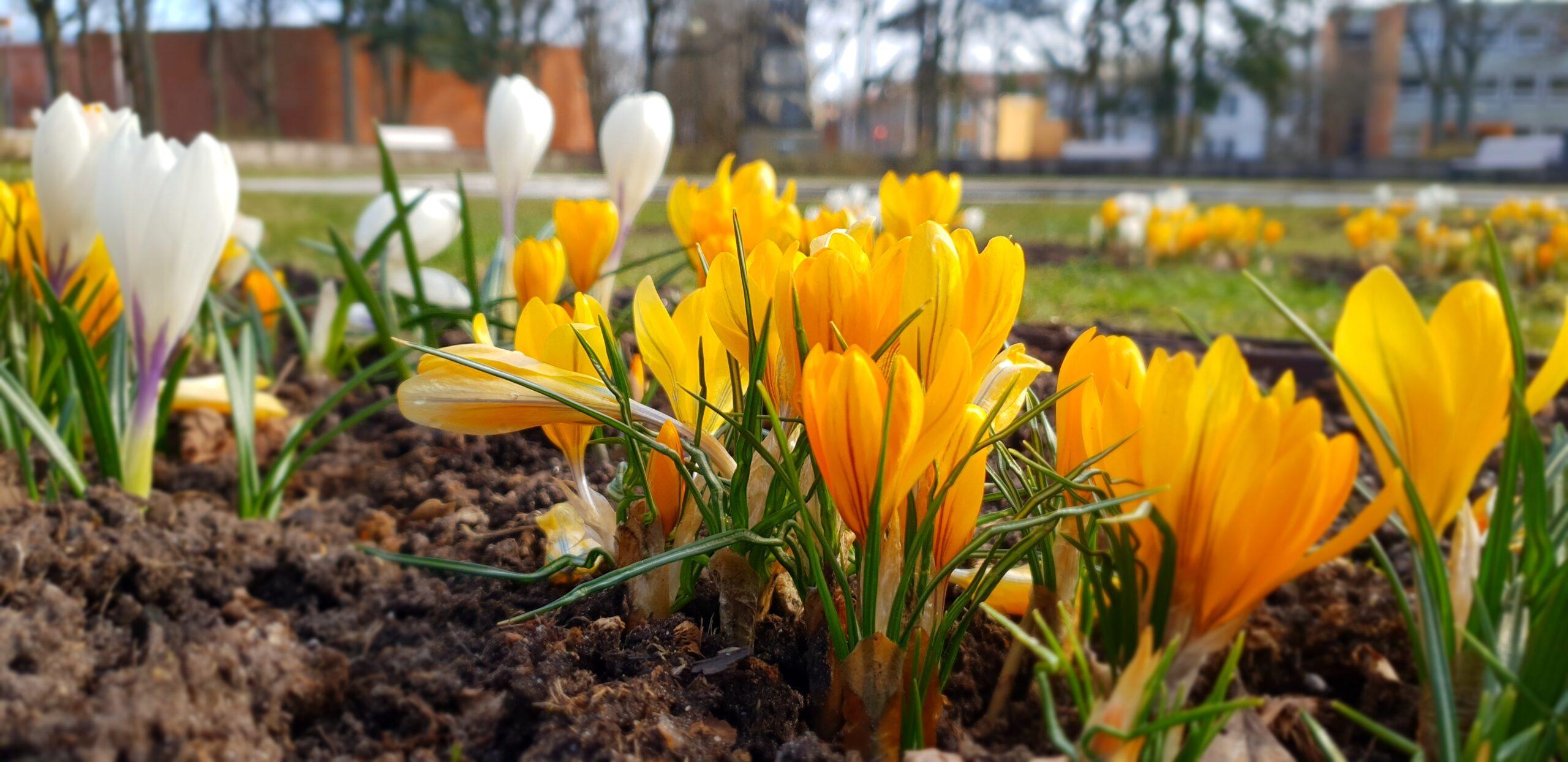 Spring in Parnu_ Errit Kuldkepp_Positively Inspiring Lifestyle_2020 (29)