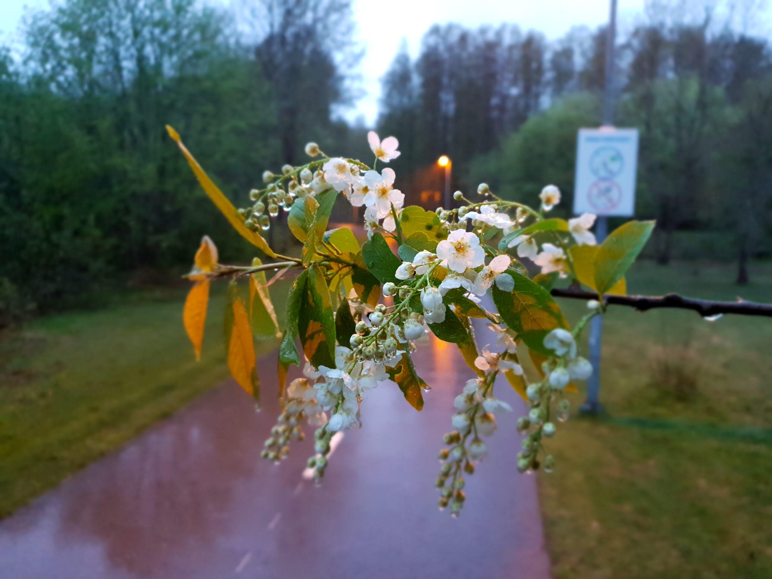 Spring in Parnu_Errit Kuldkepp_Positively Inspiring Lifestyle_2019 (47)