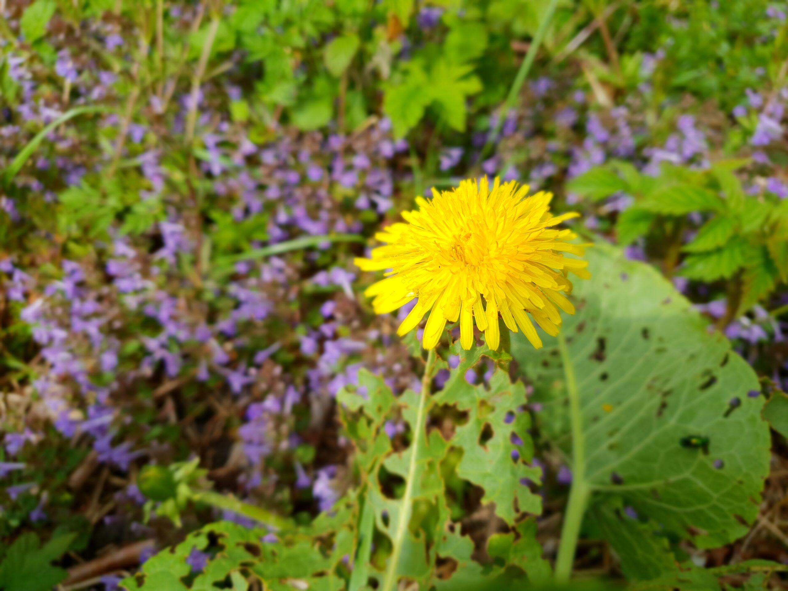 Spring in Parnu_Errit Kuldkepp_Positively Inspiring Lifestyle_2019 (51)