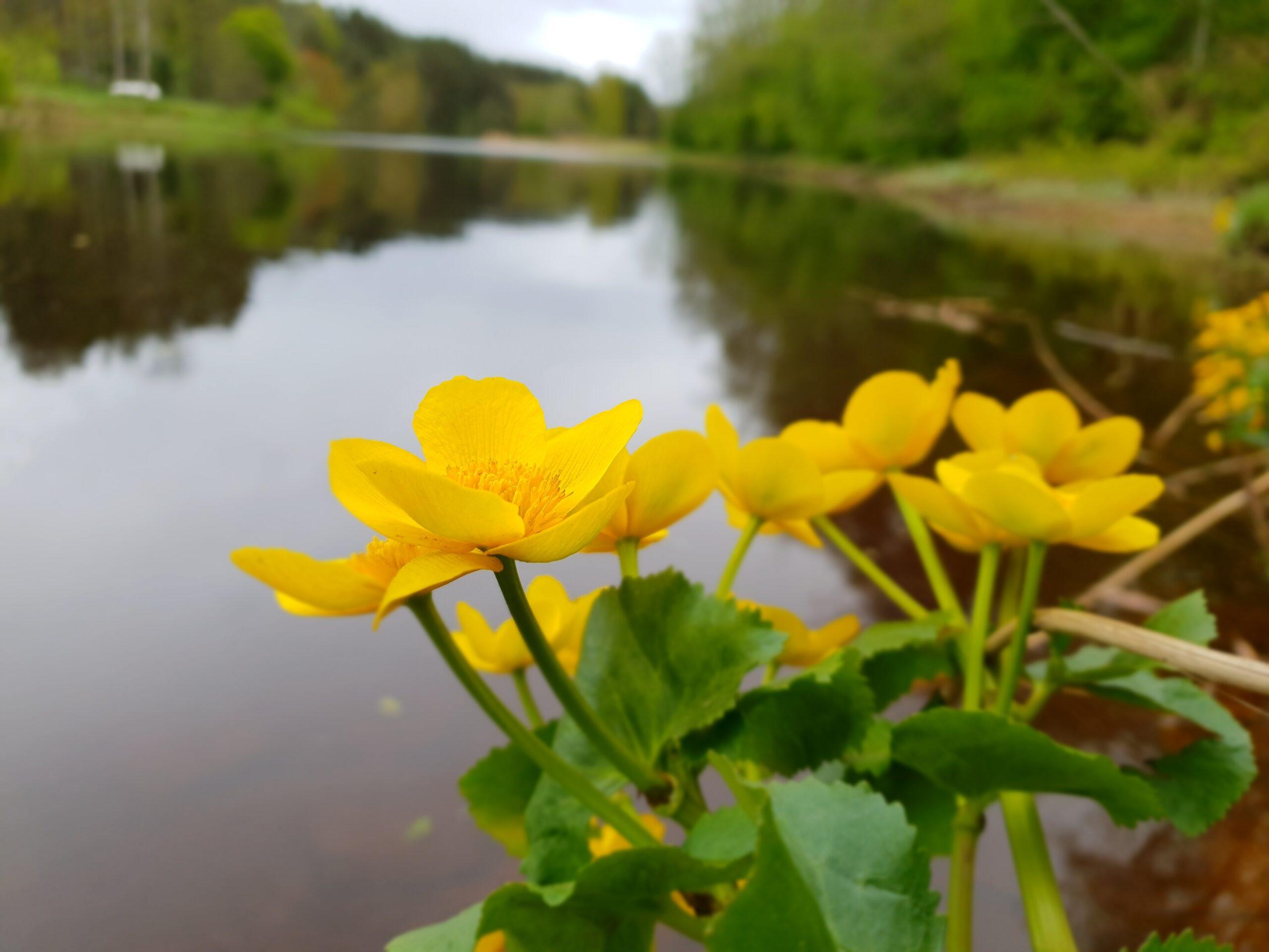 Spring in Parnu_Errit Kuldkepp_Positively Inspiring Lifestyle_2019 (53)